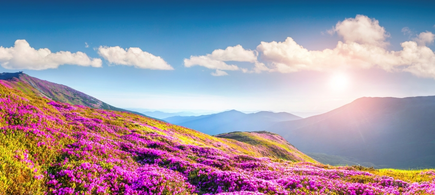 Mountain scene with purple flowers
