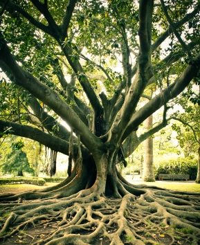 tree with well established roots