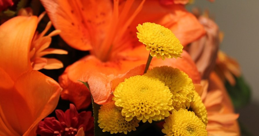 orange and yellow flowers